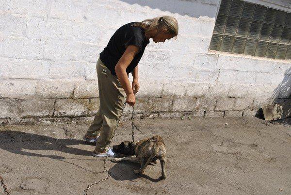 Мы в ответе за тех, кого приручили? В Мариуполе бездомная морит голодом породистых собак, фото-6