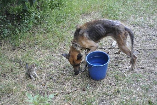Мы в ответе за тех, кого приручили? В Мариуполе бездомная морит голодом породистых собак, фото-2