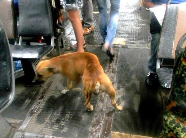 В Кривом Роге четвероногий друг искал хозяина в трамвае (ФОТО), фото-4