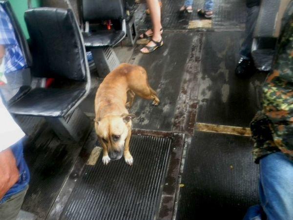 В Кривом Роге четвероногий друг искал хозяина в трамвае (ФОТО), фото-3