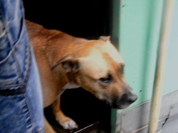 В Кривом Роге четвероногий друг искал хозяина в трамвае (ФОТО), фото-2