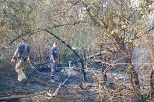 В Николаеве из-за мусорной свалки чуть не сгорел Матвеевский лес (ФОТО), фото-3