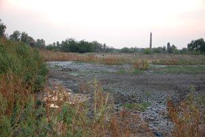 В Николаеве из-за мусорной свалки чуть не сгорел Матвеевский лес (ФОТО), фото-1