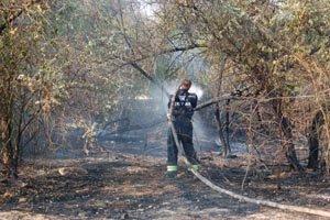 В Николаеве из-за мусорной свалки чуть не сгорел Матвеевский лес (ФОТО), фото-4
