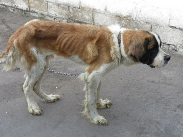 Мариупольские зоозащитники спасли породистых собак с улицы Гайдара (ФОТО), фото-4
