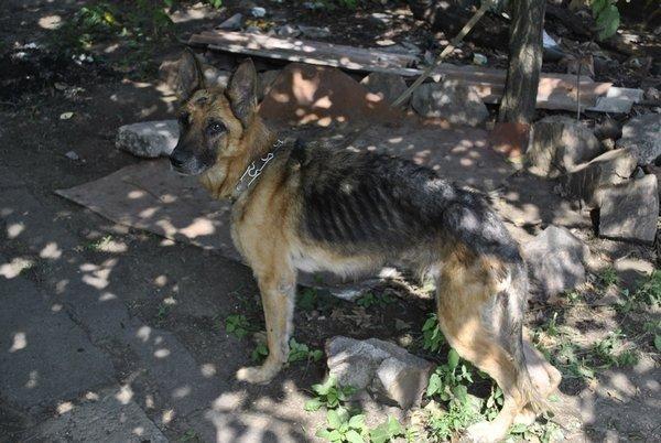Мариупольские зоозащитники спасли породистых собак с улицы Гайдара (ФОТО), фото-1