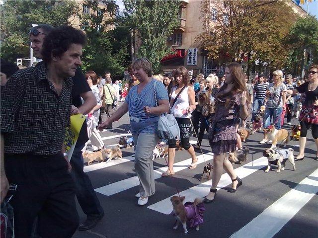 В Мариуполе породистые собаки примут участие в карнавале на День города (ФОТО), фото-1