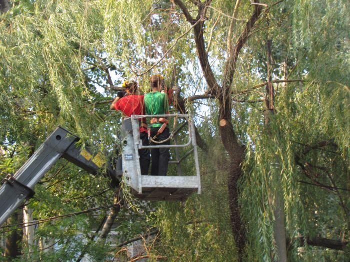 В Мариуполе педагоги отправили на щепу около 600 деревьев (ФОТО), фото-1
