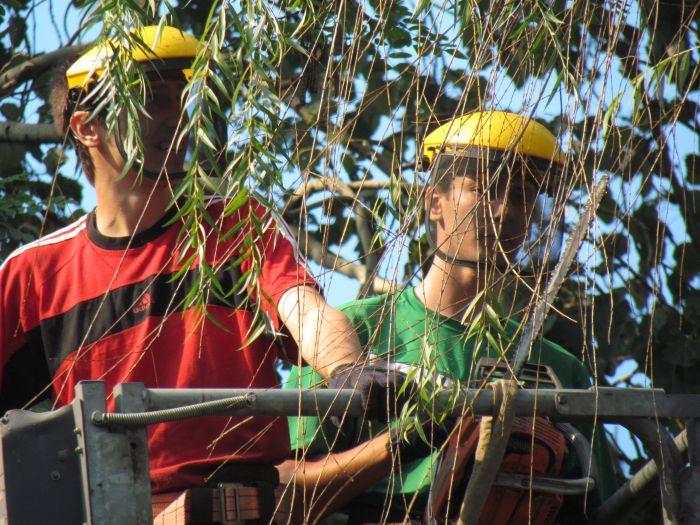 В Мариуполе педагоги отправили на щепу около 600 деревьев (ФОТО), фото-4