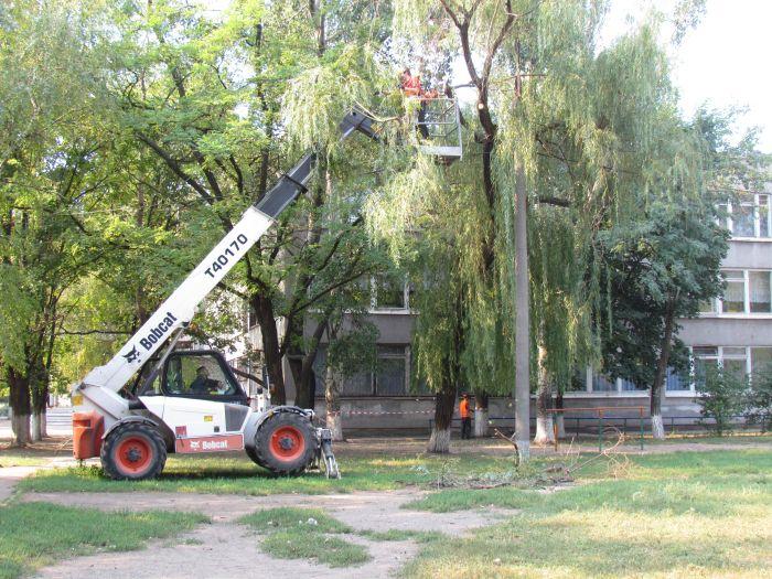 В Мариуполе педагоги отправили на щепу около 600 деревьев (ФОТО), фото-2