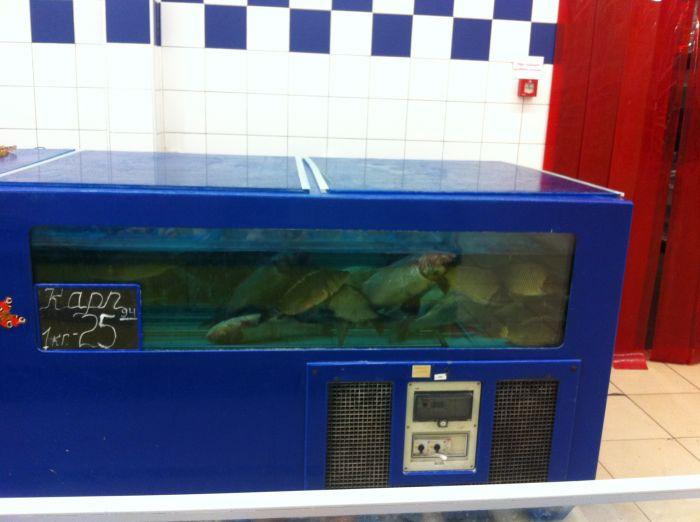В мариупольском супермаркете рыба плавает кверху брюхом (Фотофакт), фото-1