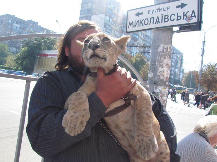 По Мариуполю разгуливает львица (ФОТО), фото-7