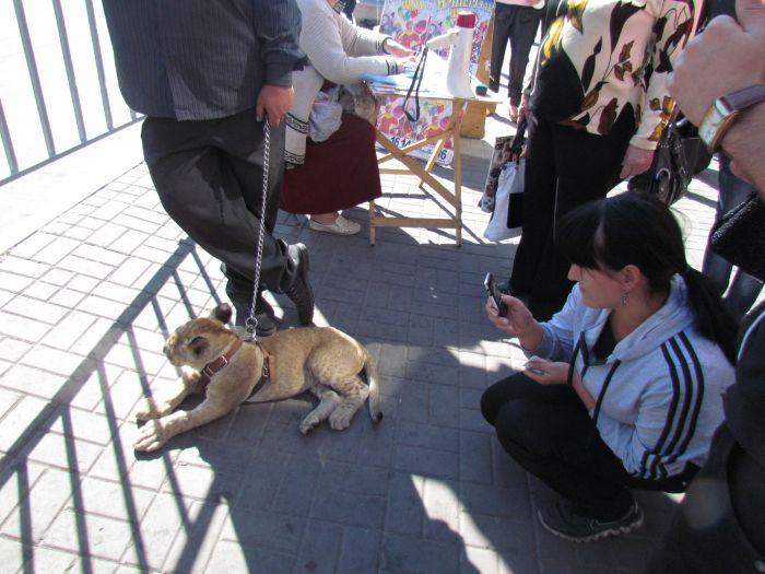 По Мариуполю разгуливает львица (ФОТО), фото-8