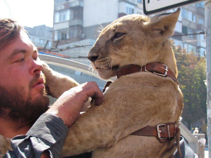 По Мариуполю разгуливает львица (ФОТО), фото-1