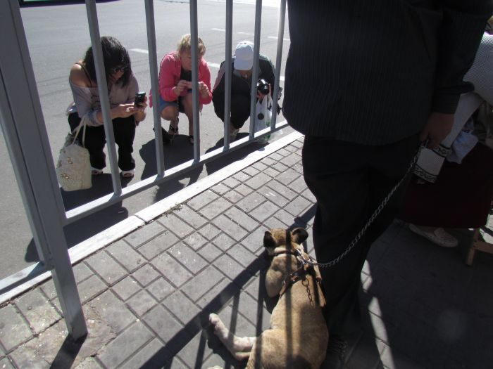 По Мариуполю разгуливает львица (ФОТО), фото-2