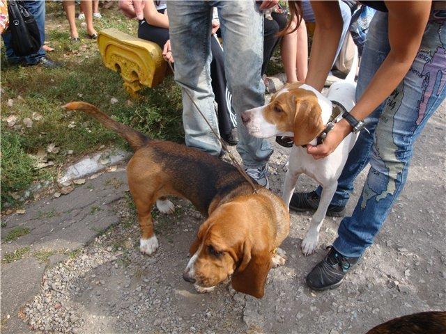 Кане корсо - самая послушная собака Мариуполя (ФОТО), фото-13