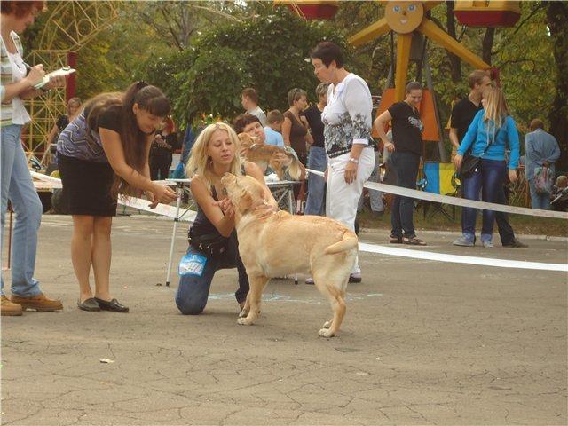 Кане корсо - самая послушная собака Мариуполя (ФОТО), фото-1