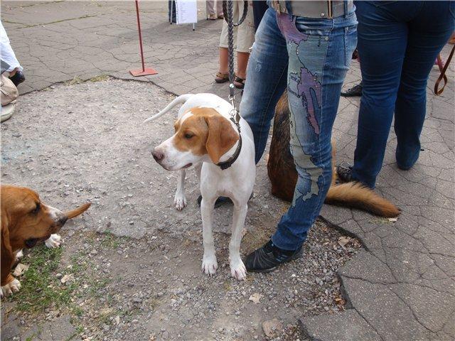 Кане корсо - самая послушная собака Мариуполя (ФОТО), фото-5