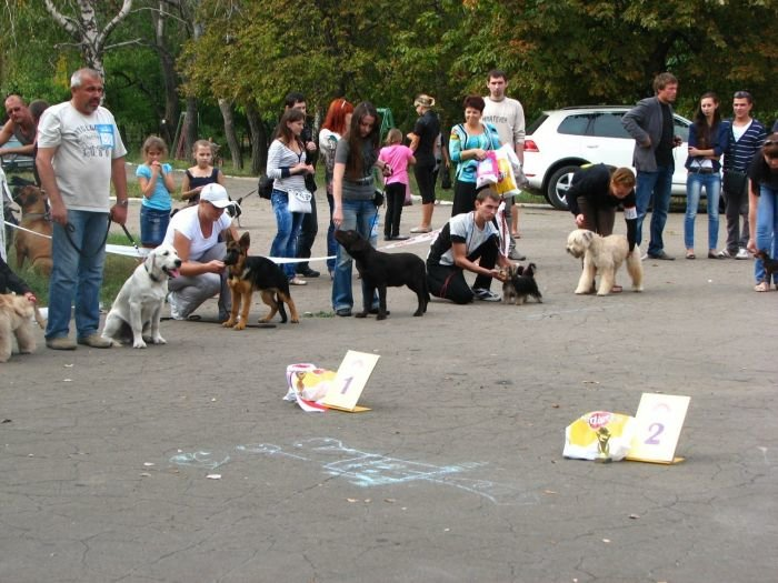 Кане корсо - самая послушная собака Мариуполя (ФОТО), фото-3