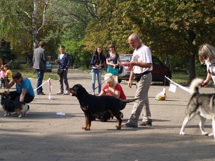 Кане корсо - самая послушная собака Мариуполя (ФОТО), фото-4