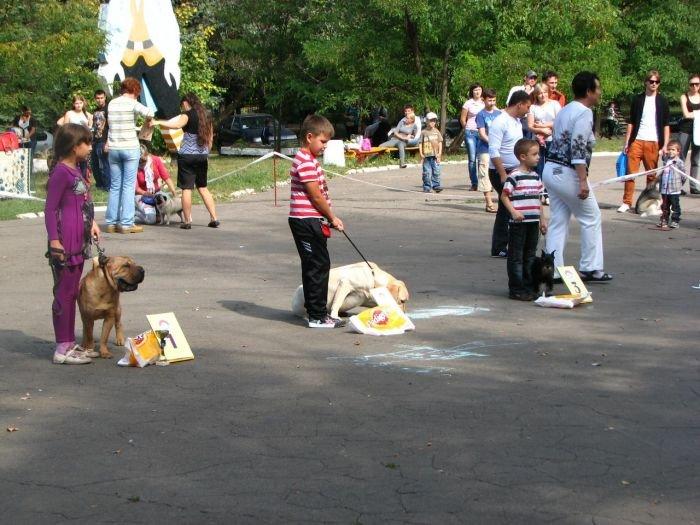 Кане корсо - самая послушная собака Мариуполя (ФОТО), фото-10