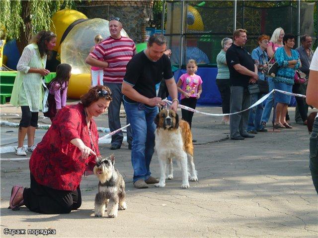 Кане корсо - самая послушная собака Мариуполя (ФОТО), фото-8