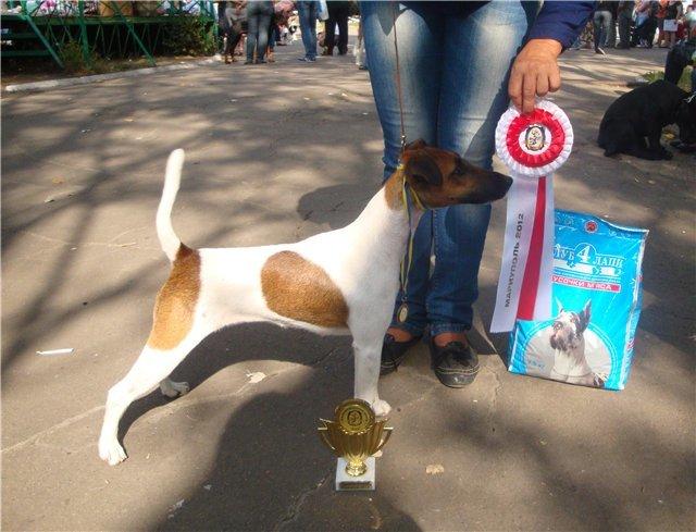 Кане корсо - самая послушная собака Мариуполя (ФОТО), фото-2