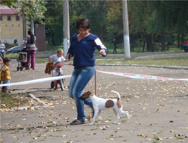 Кане корсо - самая послушная собака Мариуполя (ФОТО), фото-14