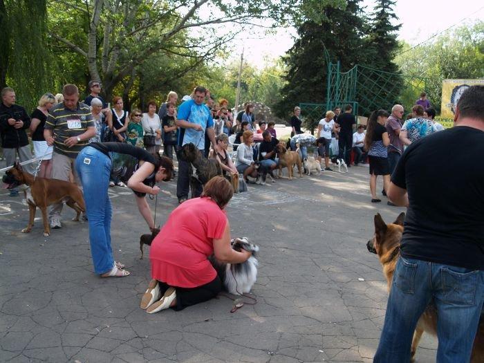 Кане корсо - самая послушная собака Мариуполя (ФОТО), фото-19