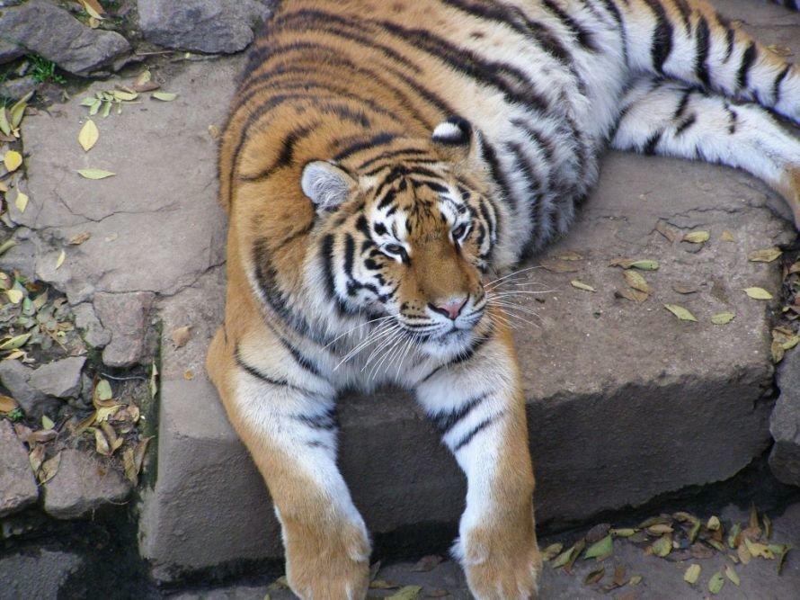 зоопарк3