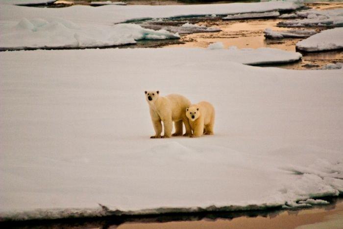 Мариуполец Сергей Демидов вместе с «Гринписом» борется с таянием арктических льдов (ФОТО), фото-2