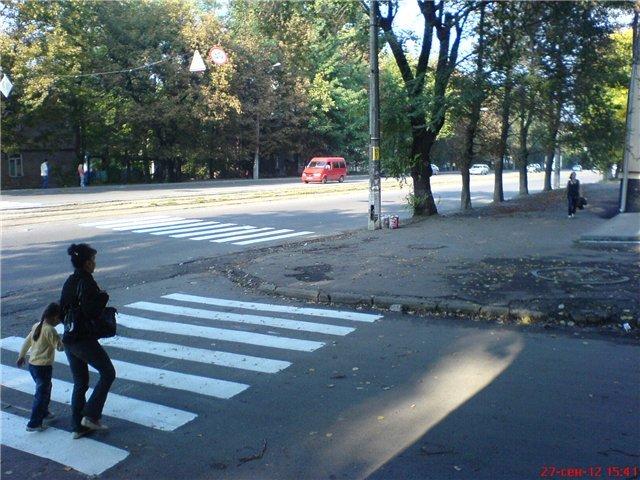 В Днепропетровске коммунальщики и общественники боролись за настоящую зебру (ФОТО), фото-3
