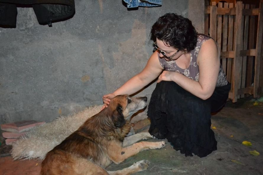 Изувеченный пес, которого одесситы достали из мусорки, нашел дом (Фото), фото-1