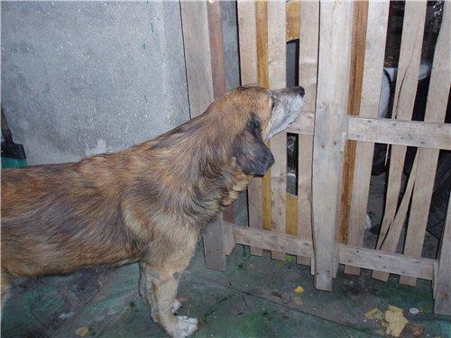 Собаку Мишку лечит новая хозяйка, а виновным «светит» штраф или срок (Фото), фото-1