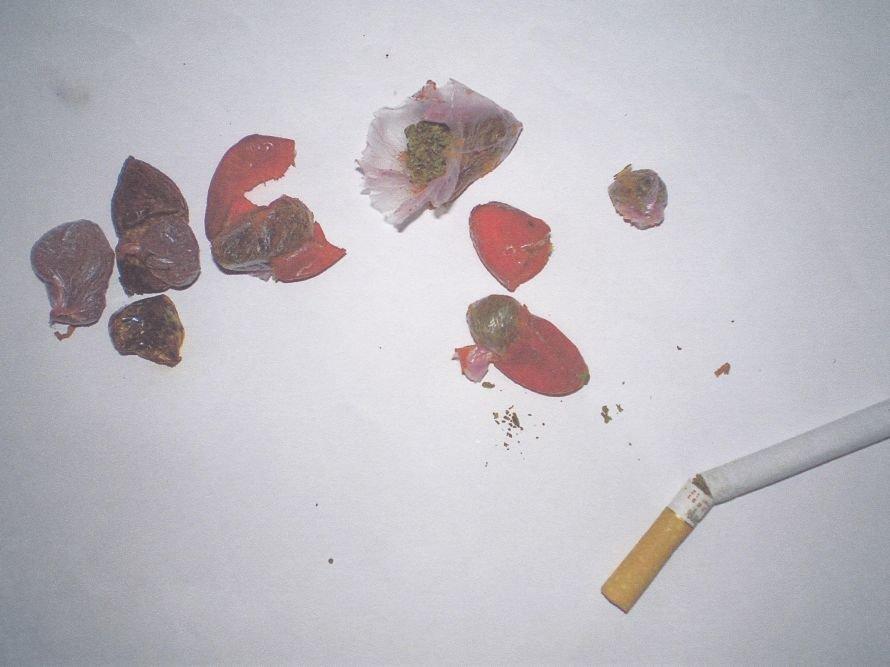 На Днепропетровщине траву могут превратить в шиповник (ФОТО), фото-1
