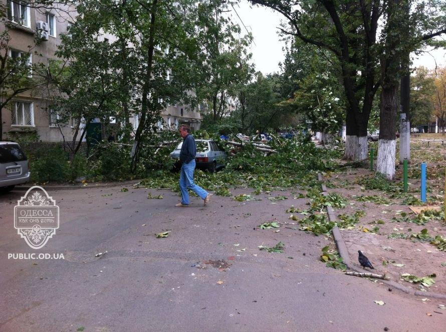 В Одессе подул ветер,  и стали валиться деревья (Фото), фото-1