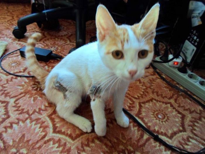В Мариуполе кошка Маркуша, сбитая легковушкой, пережила операцию и идет на поправку (ФОТО), фото-2