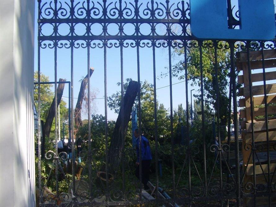 Наученные горьким опытом: на одесском стадионе «Динамо» спиливают деревья (Фото), фото-1