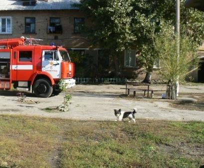 В Кировограде помощь спасателей понадобилась двум бездомным собакам, фото-1