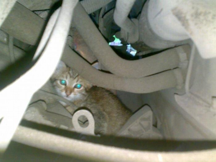 Осторожно, котики! Мариупольские зоозащитники призывают автовладельцев заглядывать под капот (ФОТО), фото-1