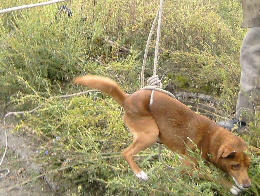 На Новой Николаевке бойцы МЧС собачку спасали, фото-1
