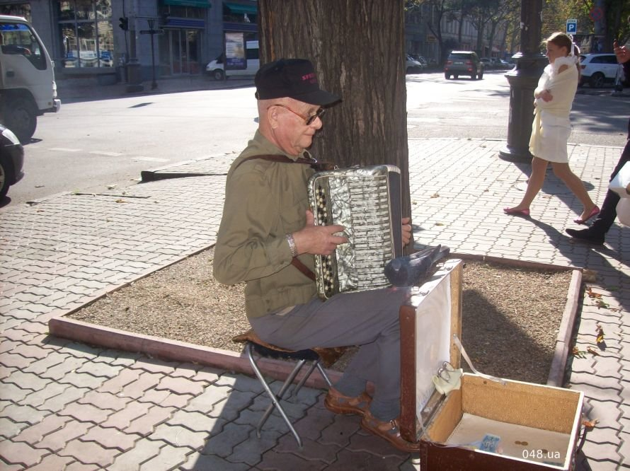 Обыкновенное чудо: в Одессе голубь-меломан подружился с уличным аккордеонистом (Фотофакт), фото-1