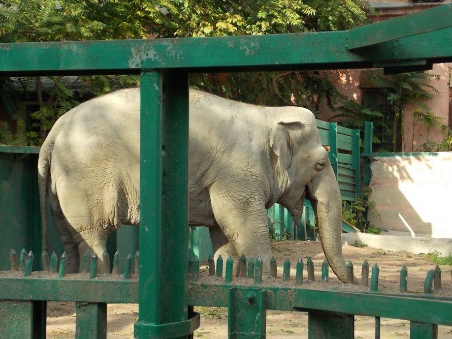 В Одесском зоопарке ищут трех женихов: один из них для слонихи, фото-1