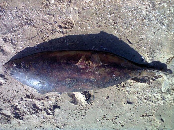 Под Мариуполем из Азовского моря выбросило на берег дельфиненка (ФОТО) , фото-1