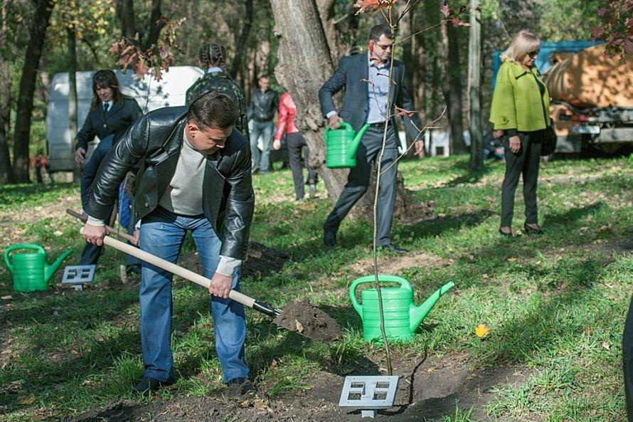 С легкой руки благотворительного сообщества в Кривом Роге вырастет красный дуб (ФОТО), фото-2