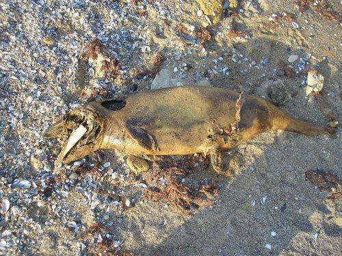 На пляже под Одессой нашли странное существо, специалисты разводят руками, фото-1