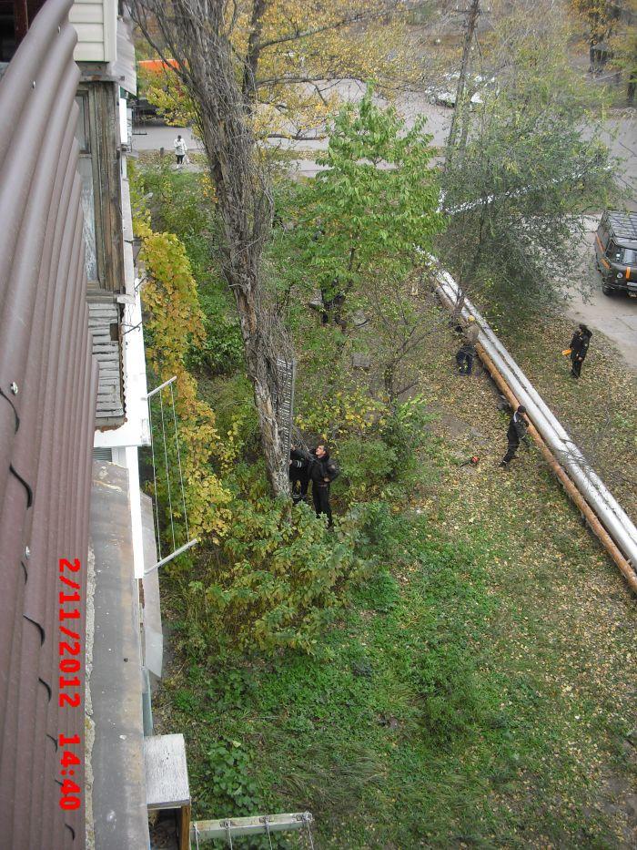 В Мариуполе огромный тополь рухнул на пятиэтажный дом (ФОТО), фото-1