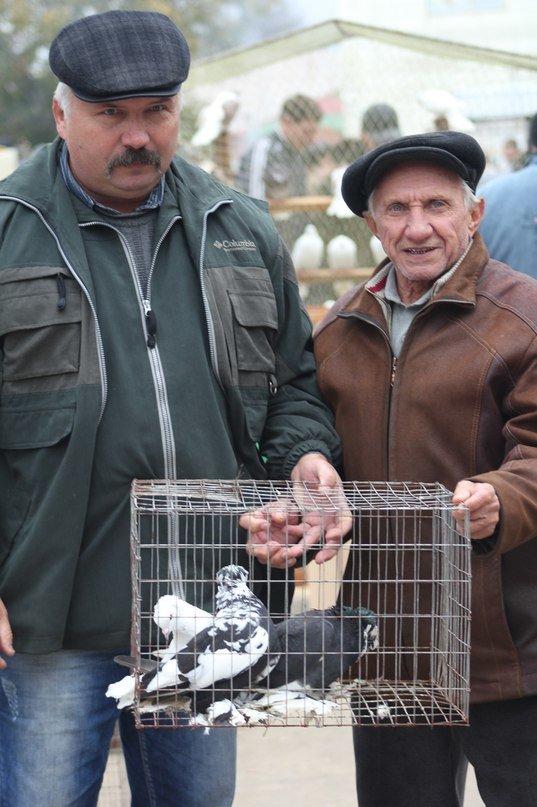 В Мариуполе голубеводы из Украины и России показали необычные породы птиц (ФОТО), фото-7