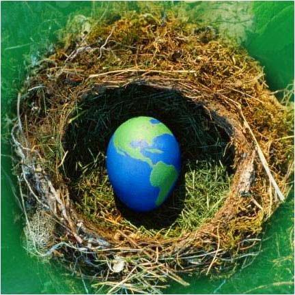 Сегодня - Международный день предотвращения эксплуатации окружающей среды во время войны, фото-1