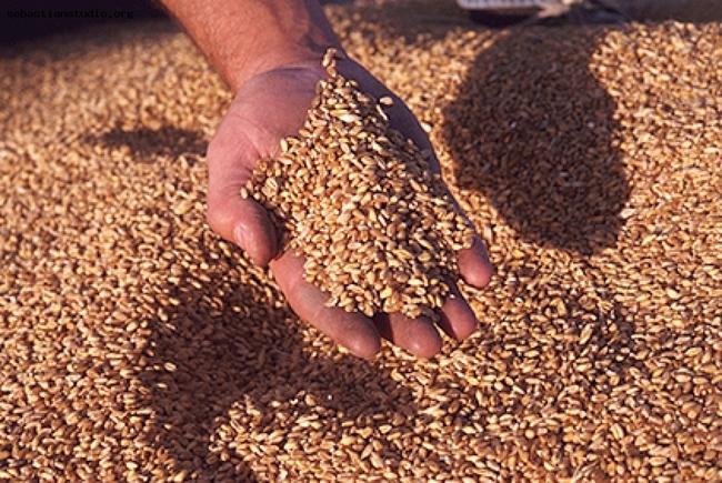 x400_bda_picture-of-grains-gNA5ZF_s8bONPM2P5Vq408Rzb8AXsynqjWoSkIB_tvoF3UGxG43gsr5el8xTGa3v2tPFmFEEcp7KRR4_fe1.jpg